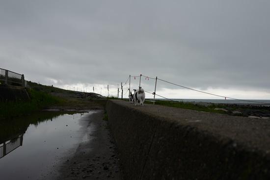 north linen sL1090486.JPG
