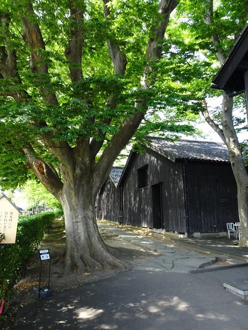 yamagata sDSC04804.JPG