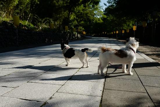 yamagata sL1040051.JPG